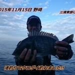 久しぶりの黒鯛狙い、しかも渚釣り。