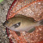 深夜から早朝までの半夜釣行。