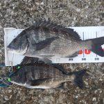 半夜釣行は撤収、早朝釣行へ切り替え。