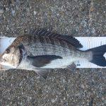 初釣りで48.5cmゲット!!