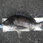 のんびり・まったりと釣りをしていたら…ズドンと重量級!!