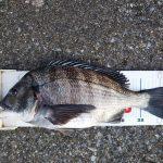 令和元年初釣行は早朝半夜の渚釣り。