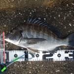 35cmゲット&正体不明魚バラシ。