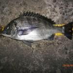 潮位 低い中の半夜釣行。