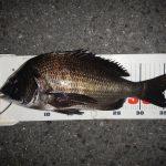 マニアックな場所で半夜釣行、黒鯛37cmをゲット。