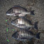 久しぶりの渚釣りで3枚ゲット。