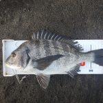 今年最後の一枚?は渚釣りでゲット。