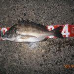 秋風 涼し、夜釣りに最適!