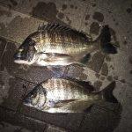 半夜釣行、複数枚はゲット出来たけど食いは浅い・渋かった。