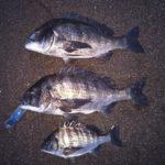 渚釣りで3枚ゲット、今日はバラさねぇぞ。