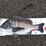 今日も渚釣り、低水温なのにフグの猛攻、何とか1枚ゲット。
