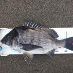 渚釣り、水温低下で苦戦も1枚ゲット。
