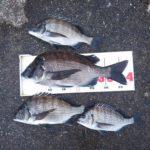 数釣りを堪能。