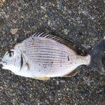 釣り納めはチンチンと戯れる。