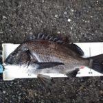 初釣りは渚釣り、なんと40UPが出ちゃった!!
