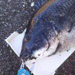 渚釣りは砂との戦い。
