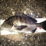 後半夜釣行、暗い時間帯に48cm 1.96kgをゲット。