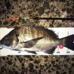 後半夜釣行、40cmの黒鯛をゲット。