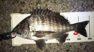 浅場で深夜釣行、開始10分で食ったのに…。