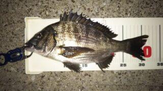 夕方からの半夜釣行、途中から潮動かず32cmのみ。